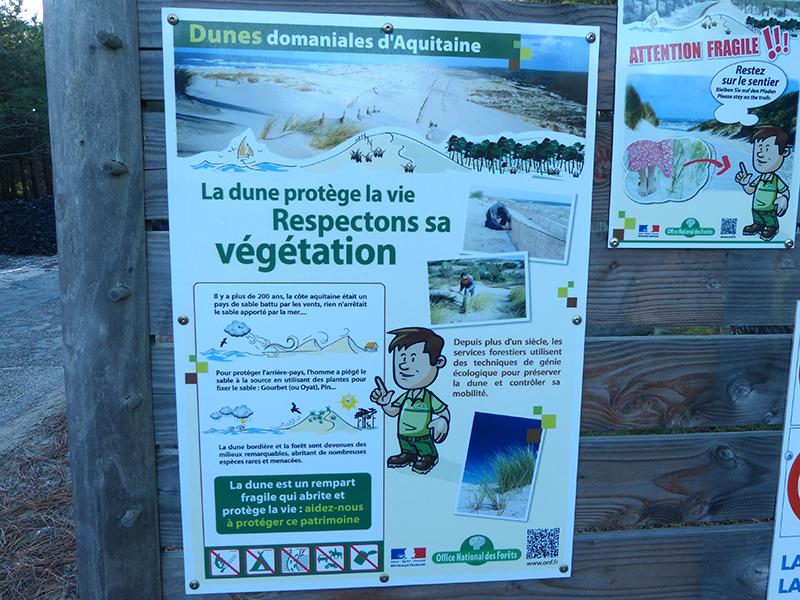 protection de la dune