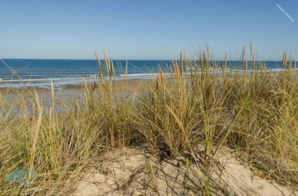 Le littoral dunaire