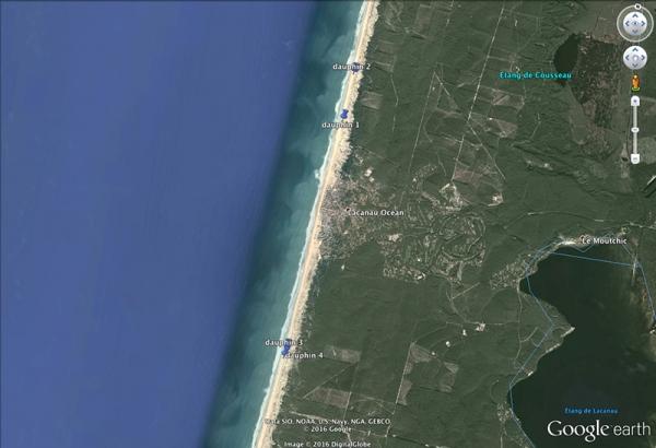 Quatre dauphins échoués à Lacanau Océan