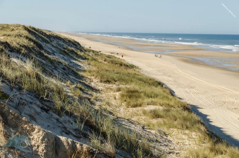 dune embryonnaire natura glisse mathieu reveillas