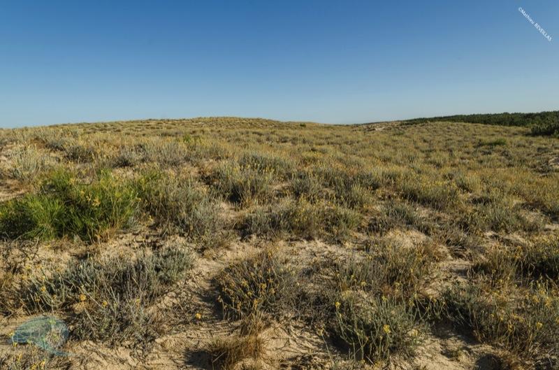 dune grise natura glisse mathieu reveillas