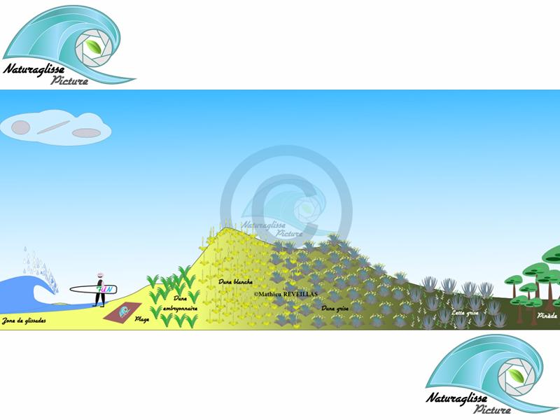 profil dune natura glisse mathieu reveillas